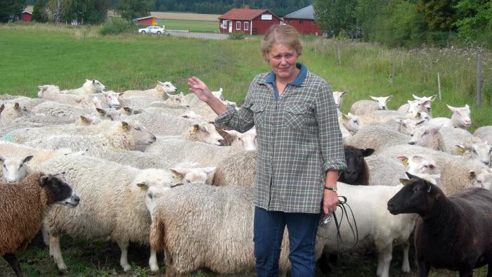 Karin Ericson, lammproducent Eskiltuna