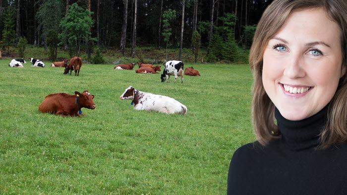 Lisa Ehde kommenterar minskade antalet mjölkkor