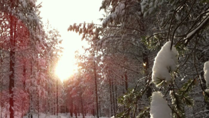 Snötäckt skog