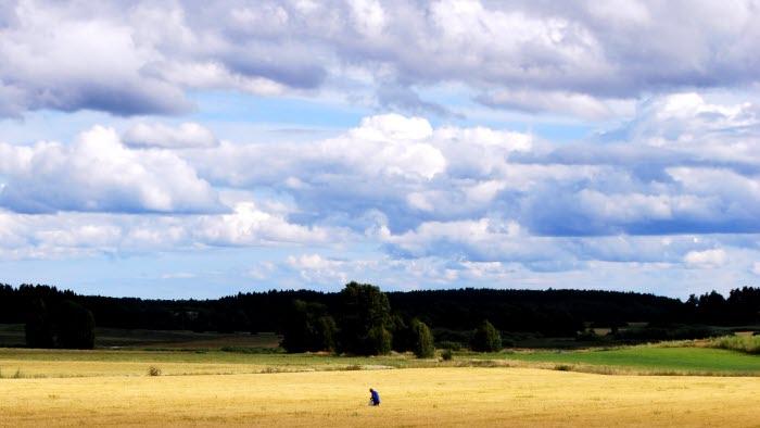 fält strängnäs2