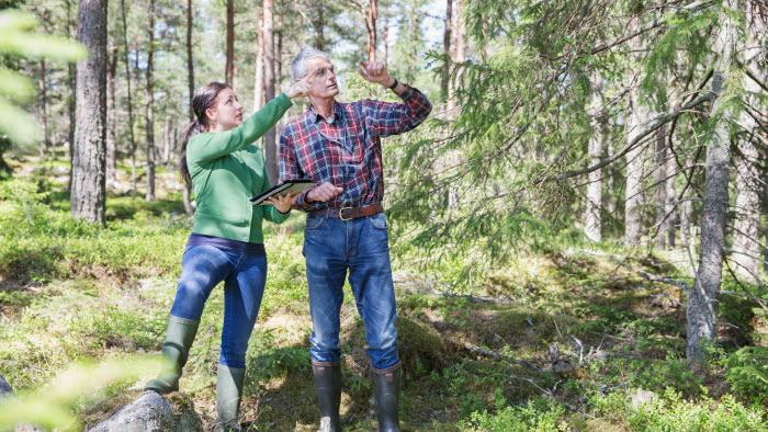 Två företagare i skogen