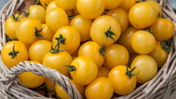 Cocktail gul, tomat