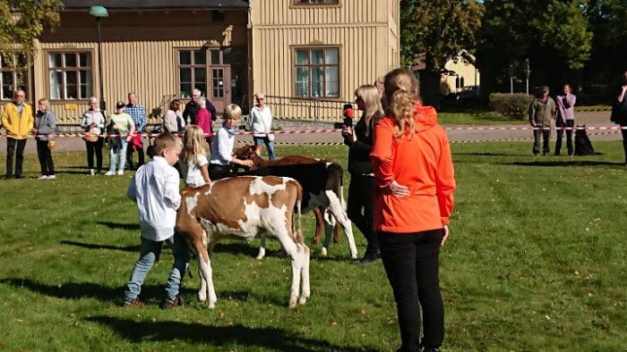 Bondens Marknad Karlsborg 2019
