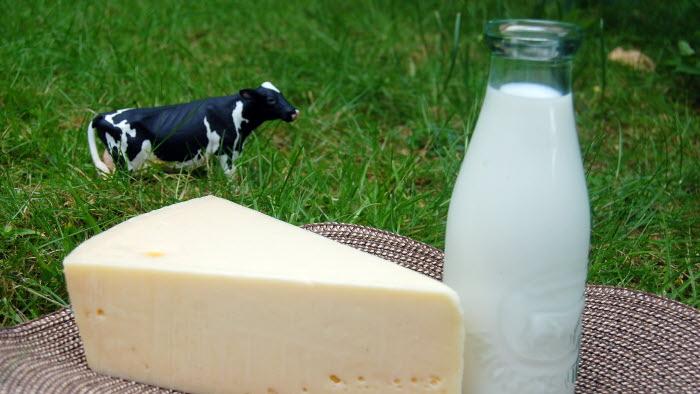 Ost mjölk och ko