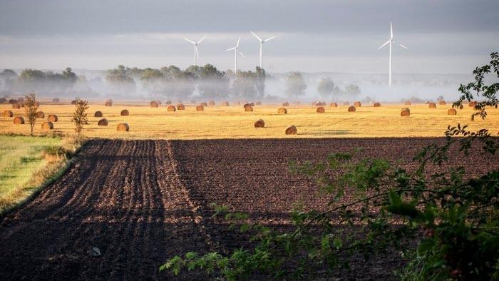 Naturbild med vindkraft