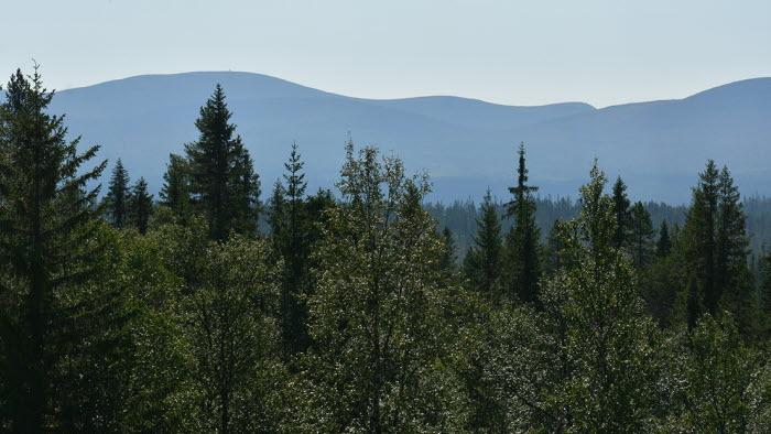 Sven Erik Hammar och LRF Konsults jurist Magnus Norberg debatt om Skogsstyrelsens agerande i överklagande av domen kring fjällnära skog.