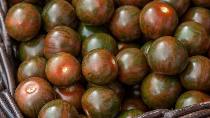Zebrino, tomat