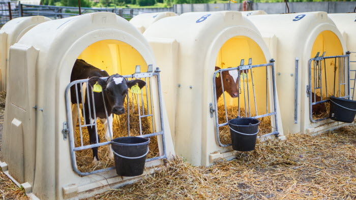 Mjölkgård - Womtorp