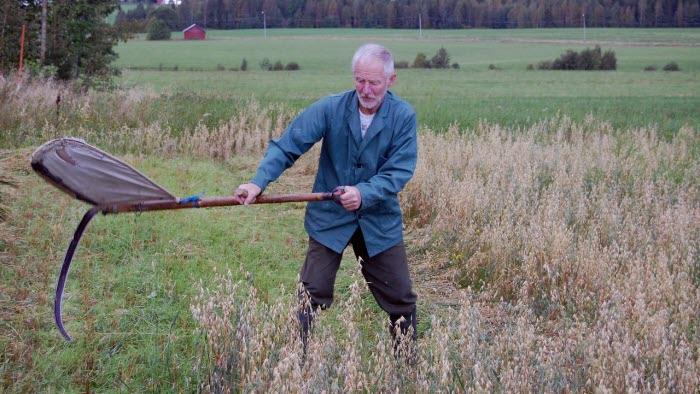 Rolf Appelblad slår hö på gammeldags vis