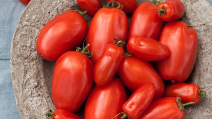 San Marzano maxi och San Marzano mini, tomater