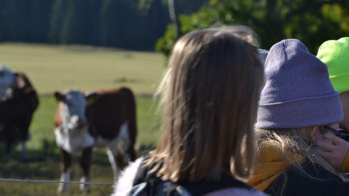 Eler på Bonden i skolan står vid hage med kor
