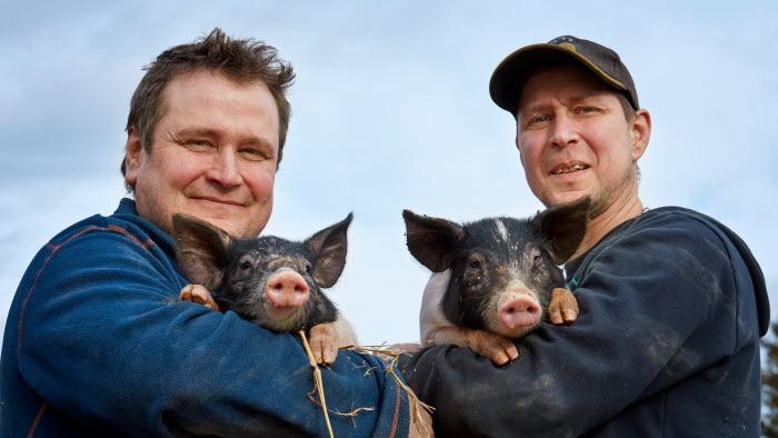 grisbönder granngården business som en bonde