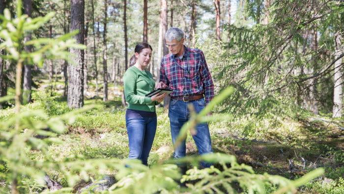 Två företgagare i skogen