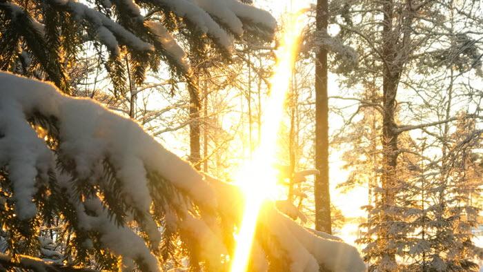 Vinterlandskap i skog