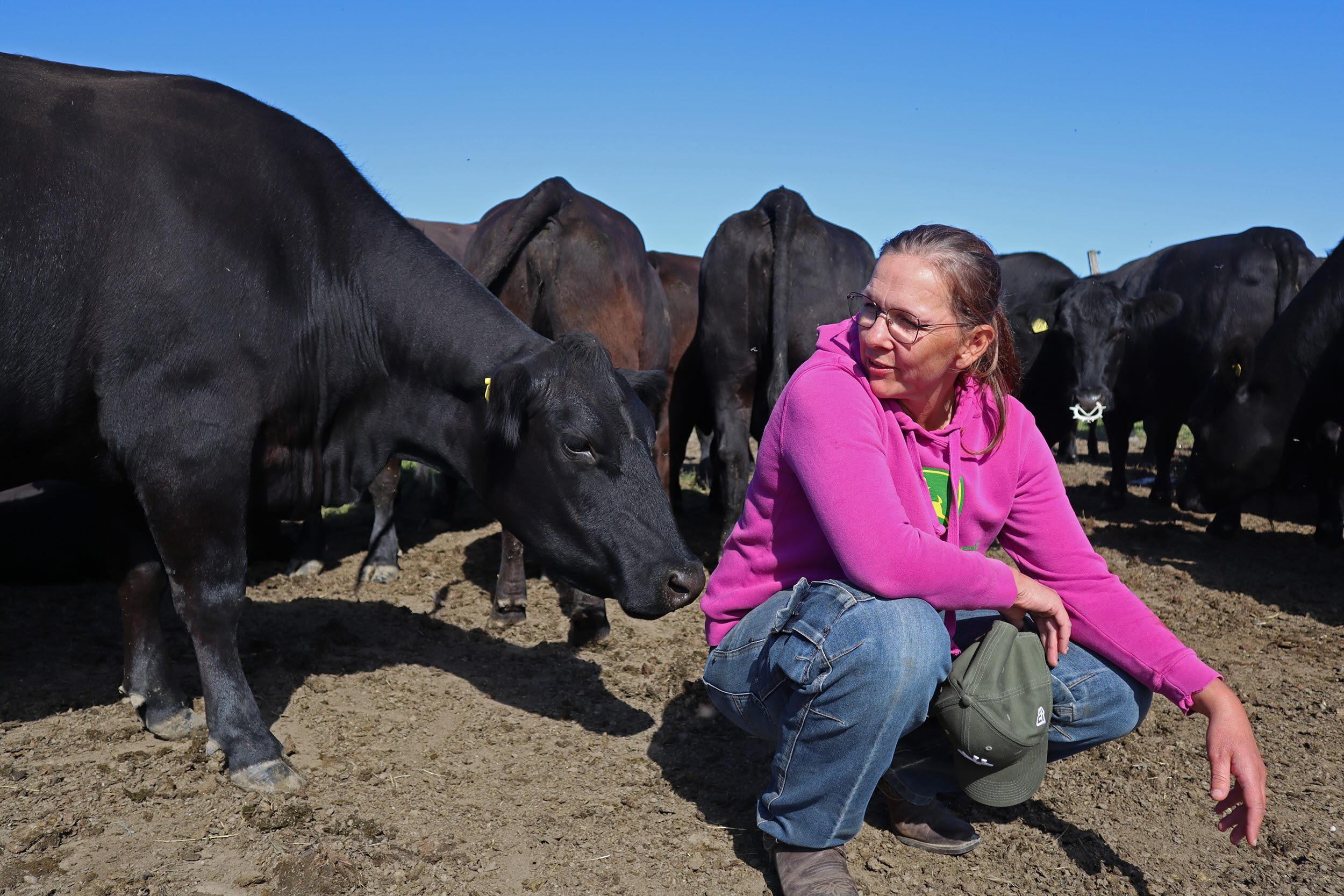 Alterdalens Angus Årets nötköttsföretag i Norrbotten 2020