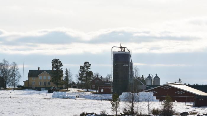 Mjölkgård i vinterlandskap