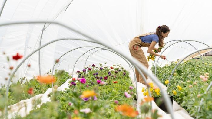 Kvinna som arbetar i ett växthus med blommor