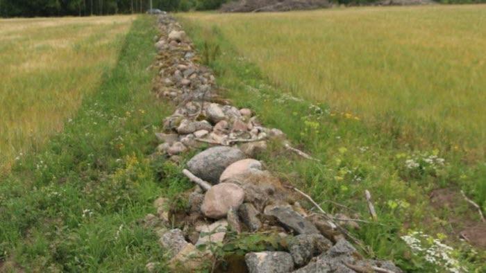 Stenmur vid Hornborgasjön
