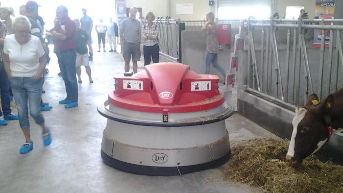 """Ladugården gav en futuristisk känsla när denna robot """"R2-D2"""" vandrade fram av sig själv och motade tillbaka fodret på foderbordet så att korna nådde det igen."""