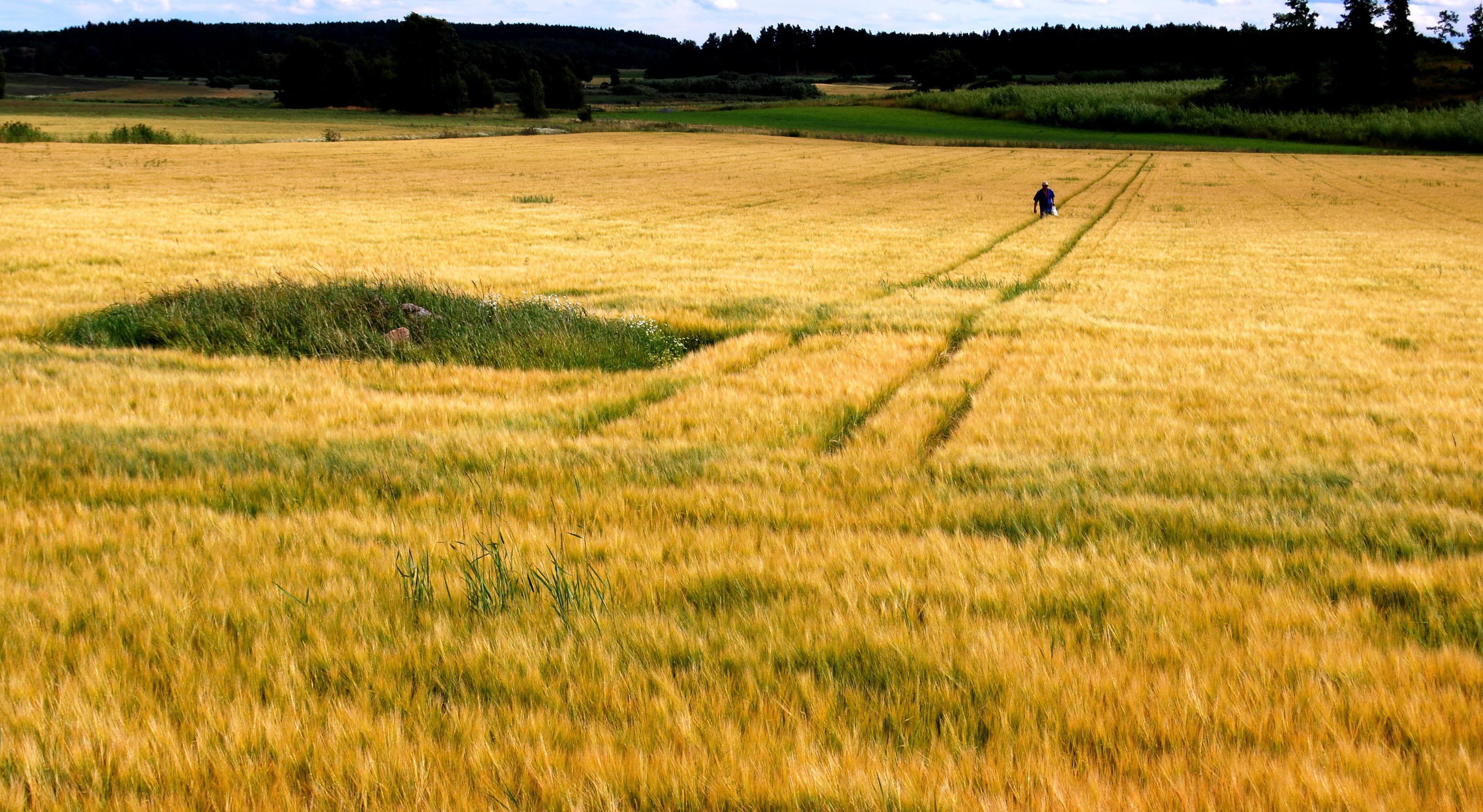 fält strängnäs1
