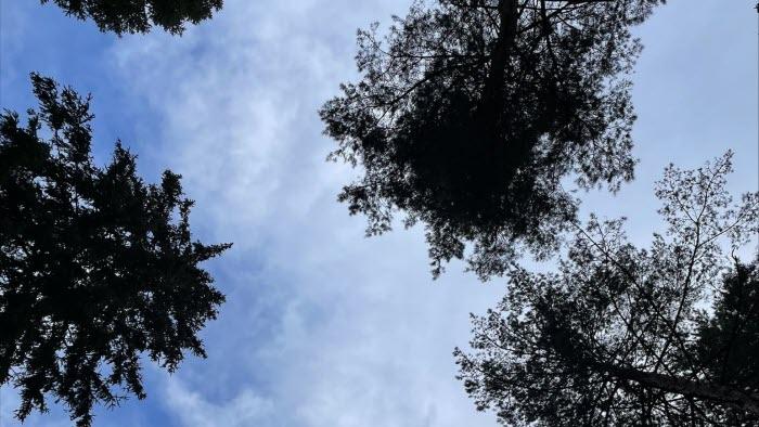 Granar mot himelen
