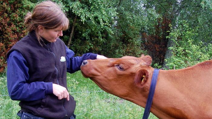 Bonde och ko