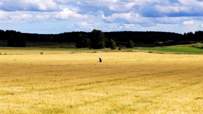 fält strängnäs