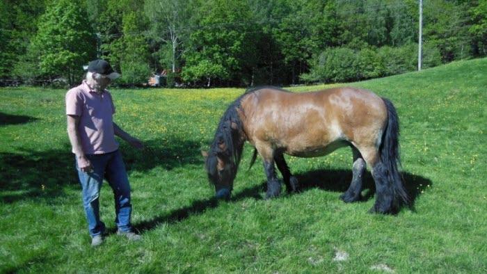 Gusseröd häst man utomhus