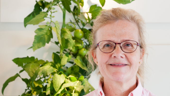 Annicka Assarsson, tomatodlare