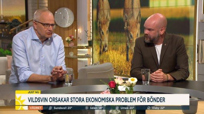 Palle Borgström i Nyhetsmorgon om vildsvinsskador