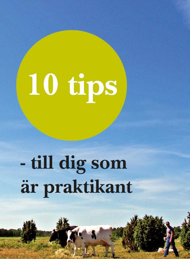 10 tips till dig som är praktikant